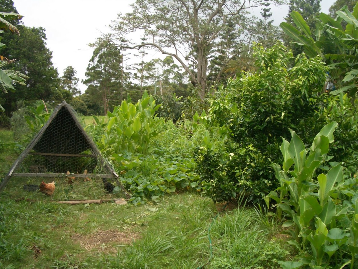 Establishing a permaculture food forest by using animals and plants as biological resources