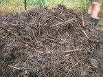 18 day hot compost