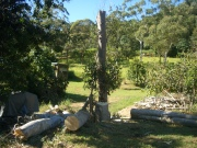 Severely pruned trees, with firewood stack and heavy mulch in background