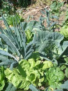 More green abundance, love the kale!
