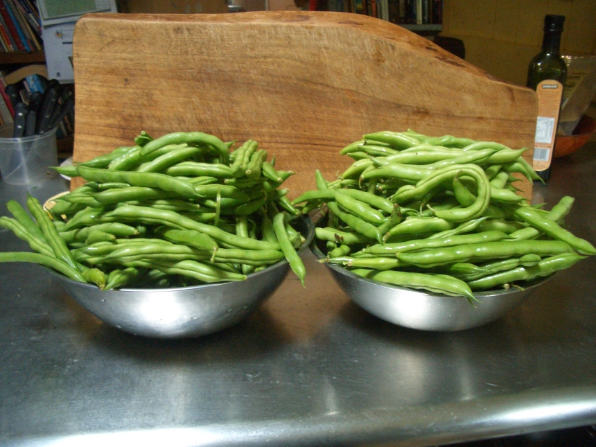 Permaculture abundance in beans!