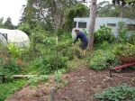 Scott starting the garden bed cleanup.