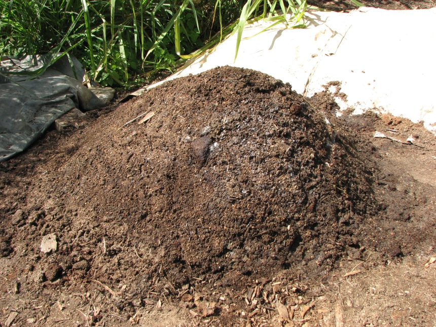 Fungal Activity in the Chook Manure compost