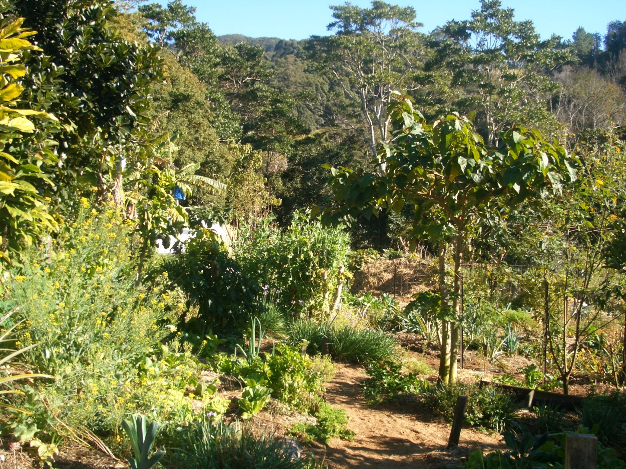 The Vegetable Garden
