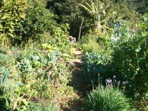 Abundance in our top garden
