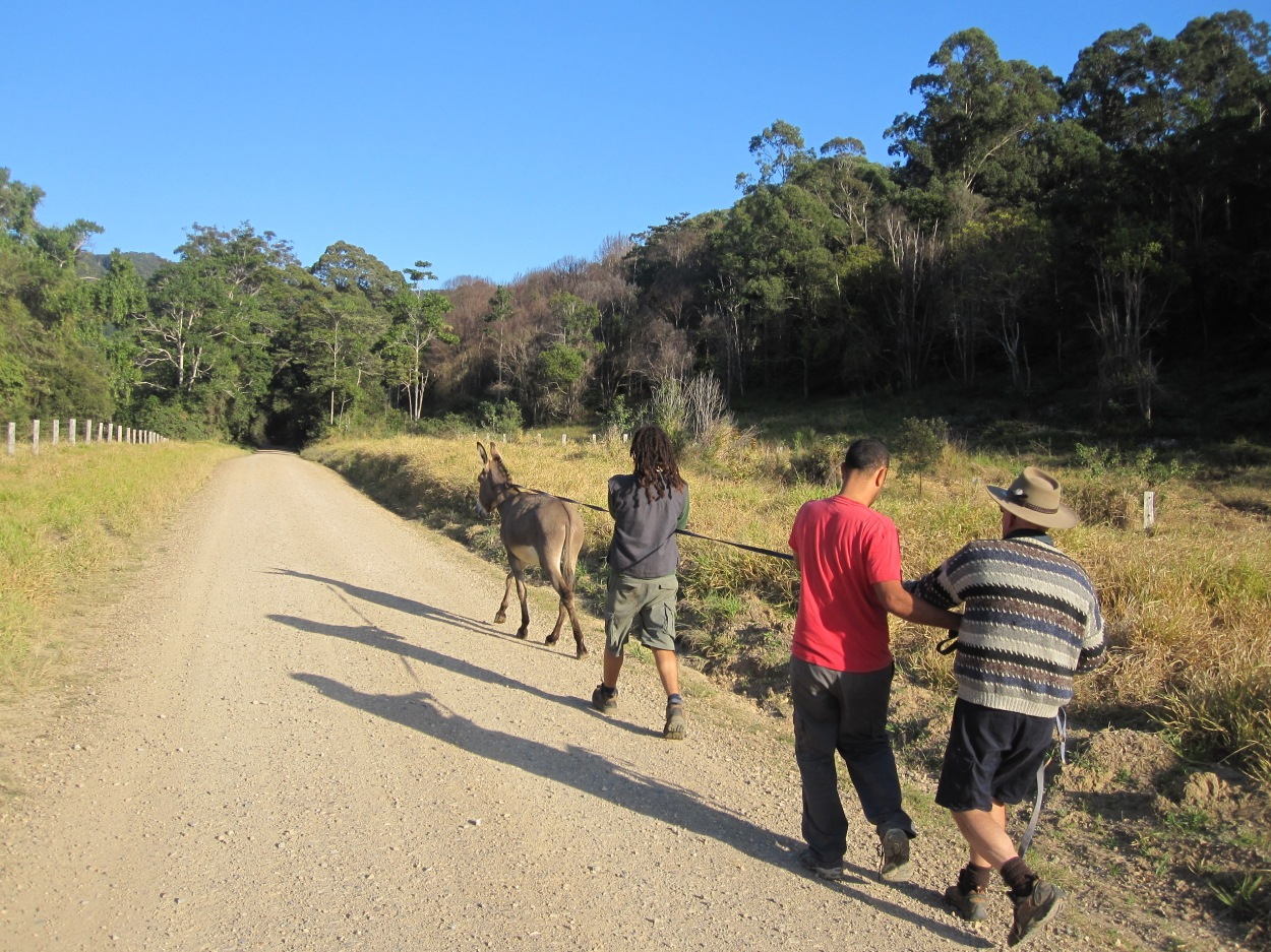 Some of our PDC students leading the donkey towards safer pastures...