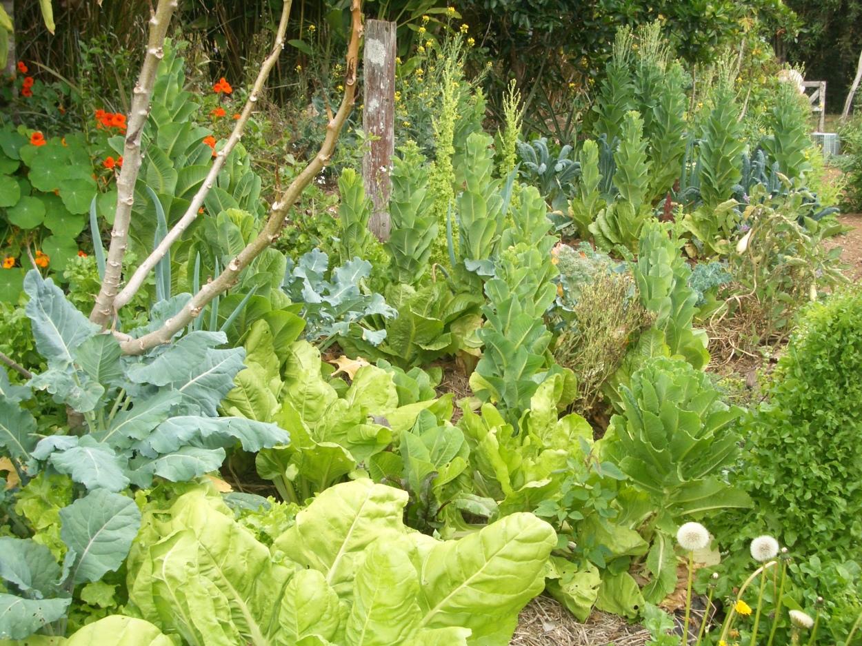 Healthy plants in healthy soil