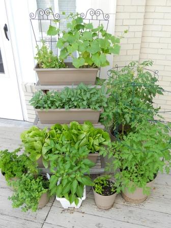 Productive container gardens