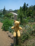Teddy standing (or should I say hanging) guard by the entrance to the vegie garden against the bush turkeys