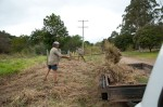 Getting mulch from the nature strip cut the day before