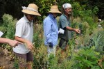Showing Noosa Permaculture group seed savers the large numbers of seeds available