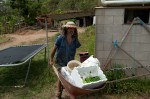 Seedlings and buckets for soil taken to the garden
