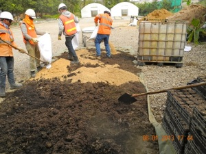 As mixing materials for the planting on site, we used dry cow manure, rice husk, forest soil and compost, which was  then wetted with compost tea and bio-fertiliser.