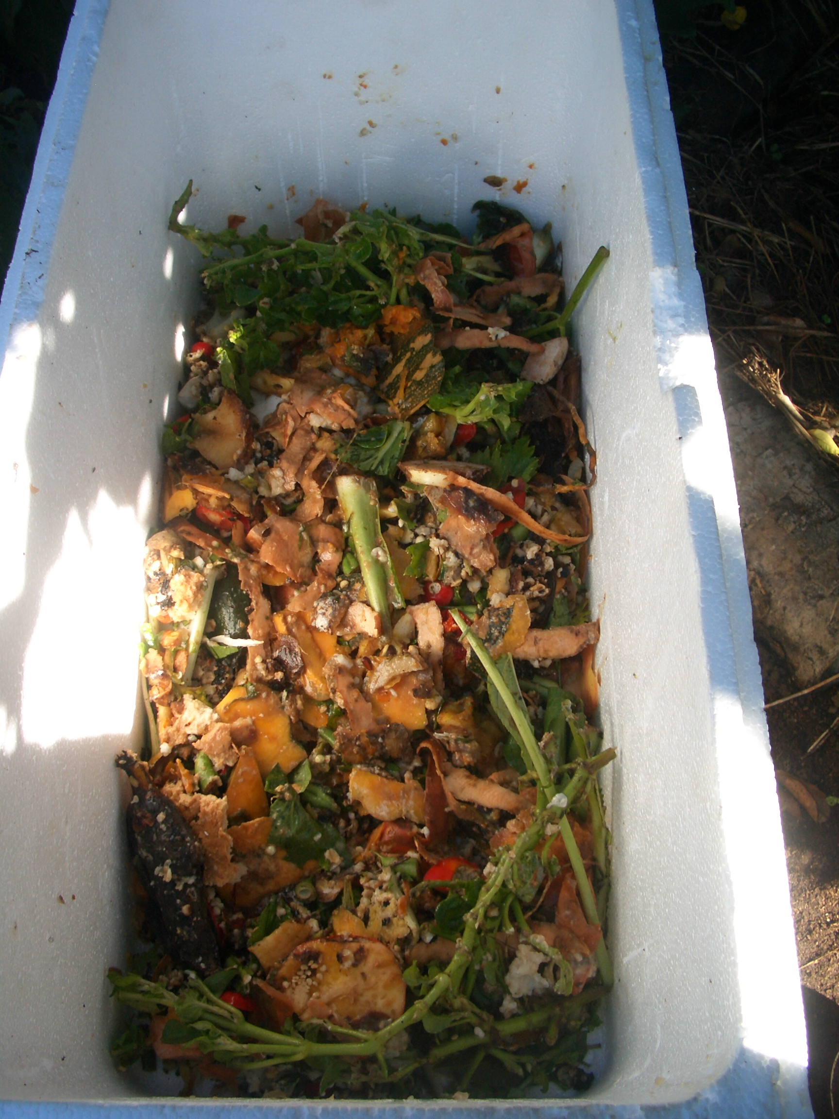 Permaculture And Food Forest Gardens Native Plant Talk: Permaculture Urban: A Simple Worm Farm