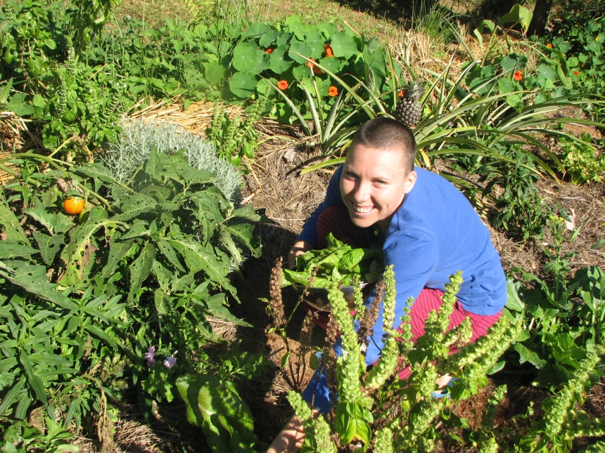Harvesting in the Permaculture garden