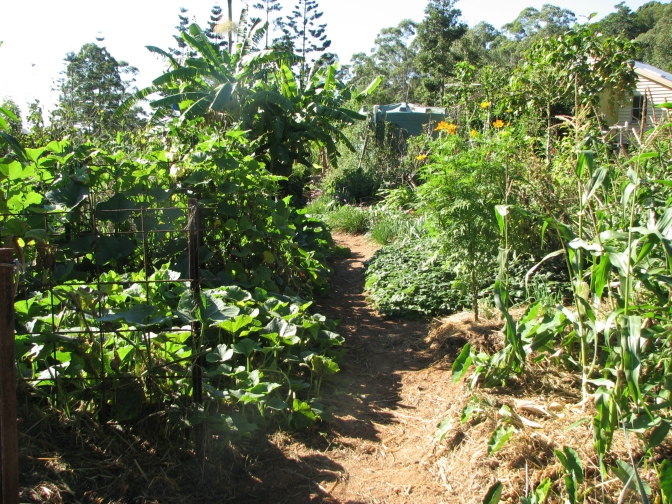 Kitchen garden in winter flush