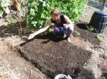 Intern Jess sowing carrots in the bed