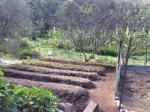 New chicken prepared garden beds, with sight of the Food Forest behind. At the Permaculture Research Institute Sunshine Coast, Queensland, Australia.