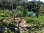 Path through the garden towards the poly tunnel / nursery area at the Permaculture Research Institute Sunshine Coast.