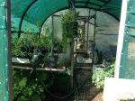 The nursery area at the Permaculture Research Institute Sunshine Coast is in a Poly tunnel, half shade house and half hot house.