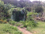 A choko and Goji berry vine cover the water tank at the residence at the Permaculture Research Institute Sunshine Coast.
