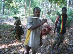 Wild pig caught in Bareo