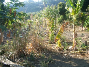 Start of a permaculture garden in Bareo, Vanuatu
