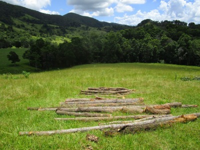 Logs for fence posts at the Permaculture Research Institute Sunshine Coast