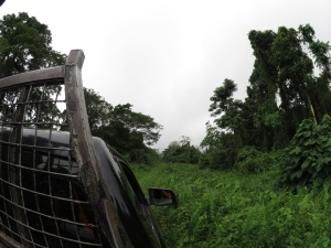 On the way to the new site for the Permaculture Research Institute Luganville