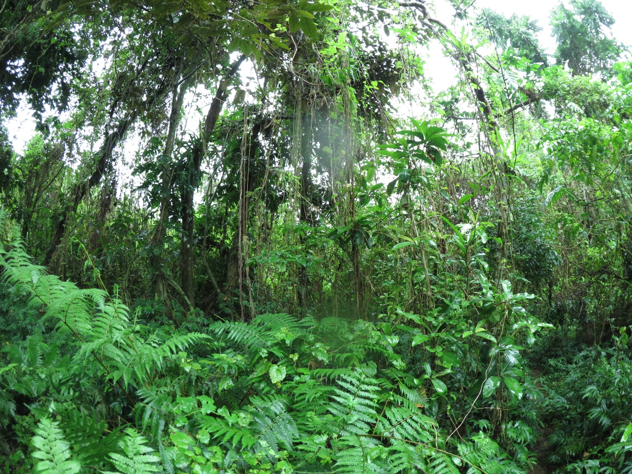 The site for the Permaculture Research Institute Luganville