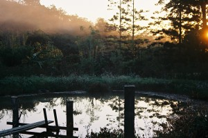 Morning glory: the pond at Maungaraeeda