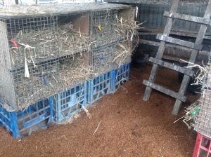 Fresh nesting boxes and flooring for the chooks af Maungaraeeda