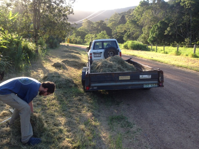 Tom Kendall cuts the road verge grass to avoid council chemical use and harvest mulch at Maungaraeeda.