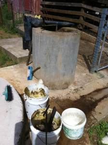 Zaia feeding the biogas biodigester at Her and Tom Kendall's permaculture farm in Australia