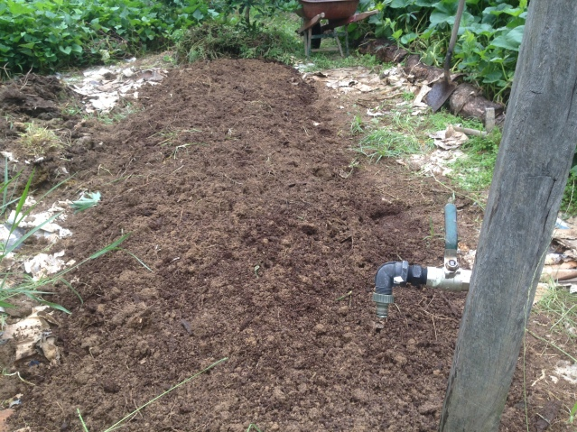 Tom Kendalls sweet potato bed with compost dug through at Maungaraeeda..