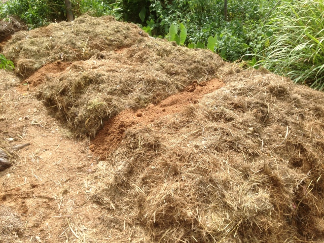Tom Kendall uses mulch on his garden beds at Maungaraeeda, home of the PRI Sunshine Coast.