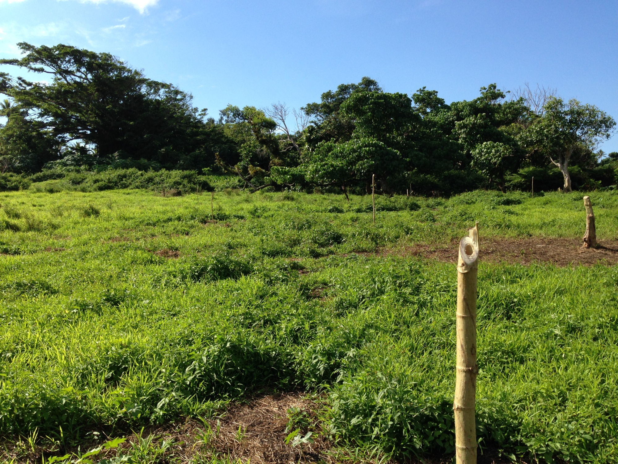 Tom Kendall analyses the landscape on the island of Tanna in Vanuatu for a Primary School.