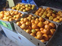 Tom Kendall supplies mandarines to the local organic co-op from his property, Maungaraeeda.