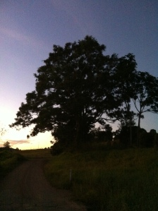 Sustainable health by going for an early morning walk