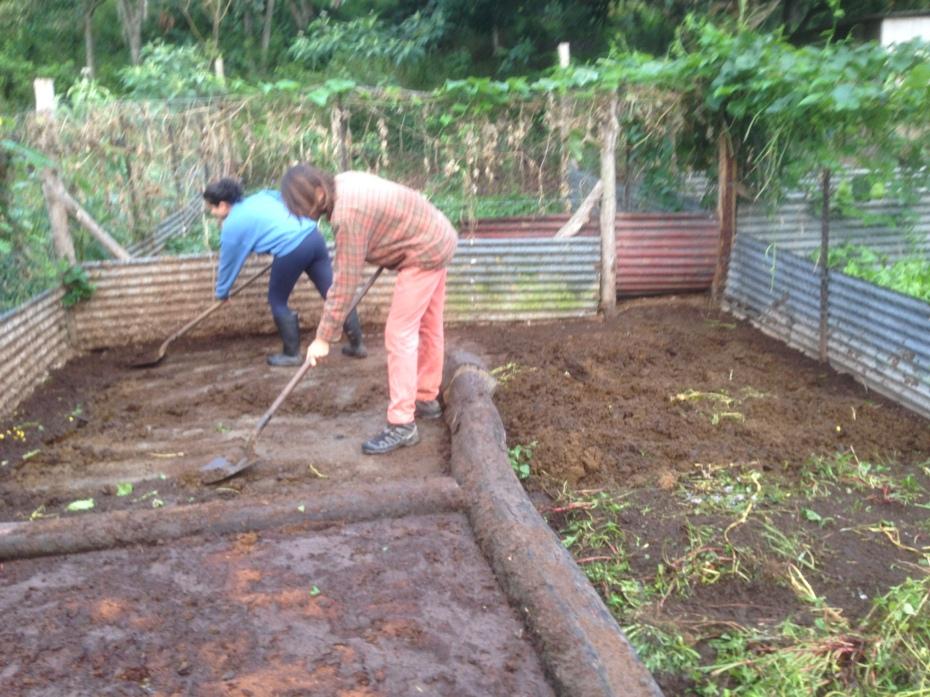 Biodigester Chicken Compost moving