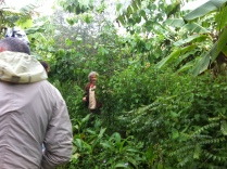 Permaculture Design Certificate course PDC course Day 2, food forest at Maungaraeeda