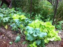Permaculture Design Certificate course PDC course Day 2, kitchen garden at Maungaraeeda